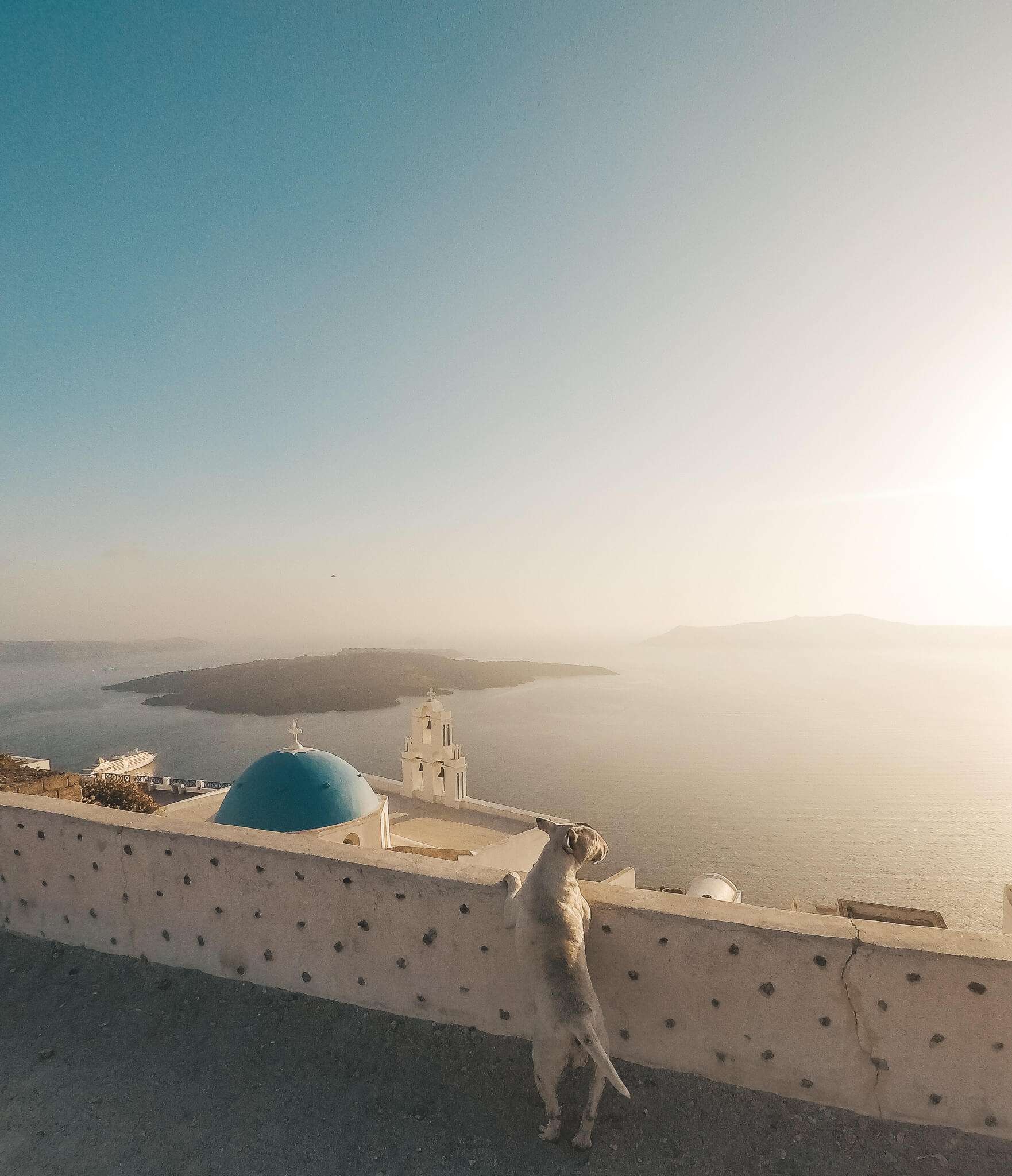 Santorin-Greek-Dog-Fira-Sunset-Reiseblog-vonPlamenundBergen